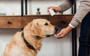 home remedies for dog bloat
