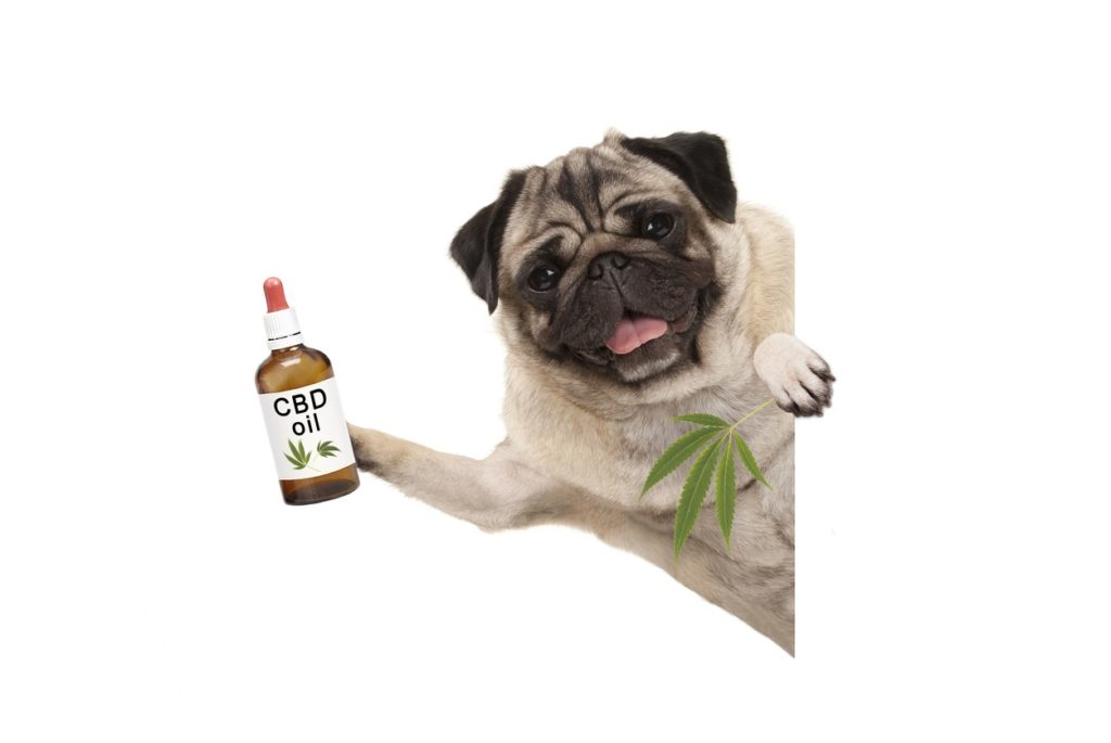 CBD Oils For Dog